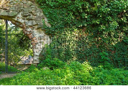 Plants On Old Wall And Iron Gate