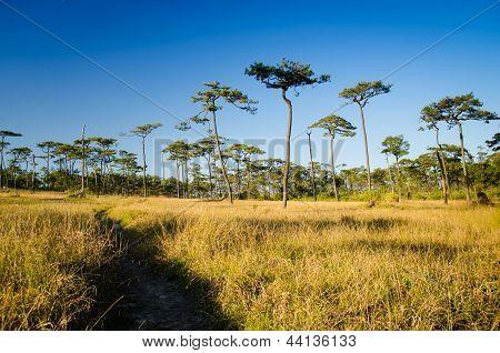 Dry Grass Field With Walk Way