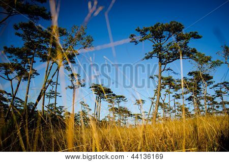 Dry Grass Field On The Mountain