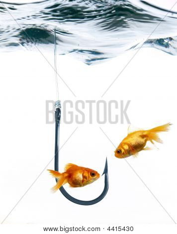 Fishes And Fish Hook