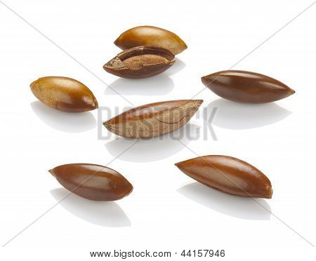 seed or seeds of sapote isolated on white poster