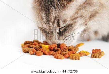 Cat eating food