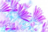 Fresh purple daisy flowers field, art work, gentle floral background, spring time blooming in sunny day poster