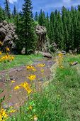 Cutleaf coneflowers in front of a river flowing through alpine landscape poster