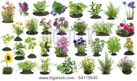 Garden Plants Grow In Soil Set