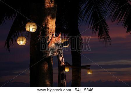 Head Of A Giraffe Along A Palm Tree At Night