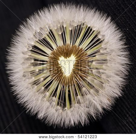 Sow-thistle Weeds
