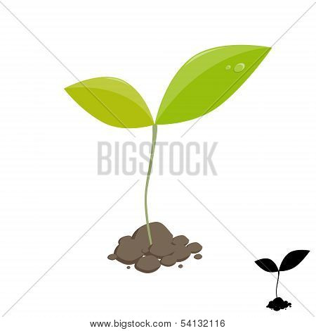 Little Plant Sprout