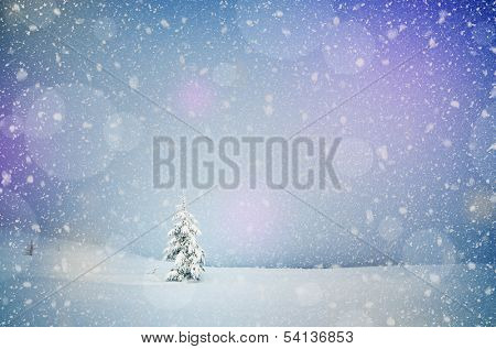 Winter landscape with snow-covered fir-tree in a lonely mountain valley. Christmas theme with snowfall poster