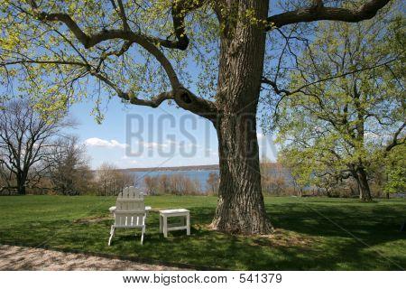 Adirondack Under Tree 001