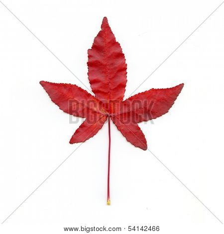 Red Leaf On White