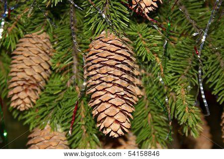 Christmas Fir Horl