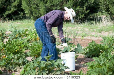 Senior Man Working Garden