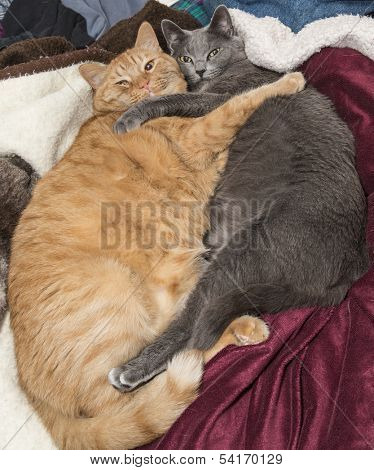 Cat best friends hugging on bed