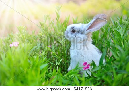 Rabbit. Cute Little Easter Bunny in the Meadow. Spring Flowers and Green Grass. Sunbeams