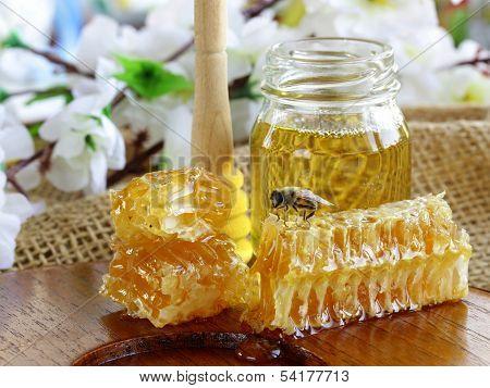honey bee on a honeycomb
