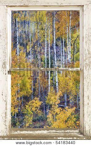 Aspen Tree Magic Cottonwood Pass White Farm House Window Portrait View