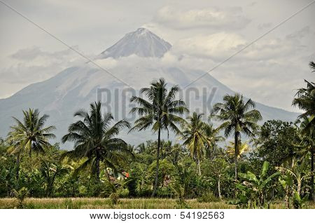 Coconut trees & active volcano, mount Merapi as a background