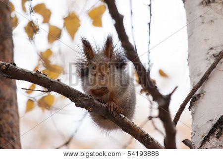 Photo Of Gray Squirrel