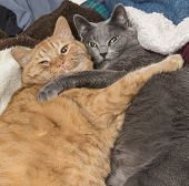 Cat best friends hugging on bed poster