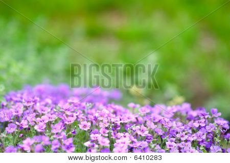 Purple Flower Bed