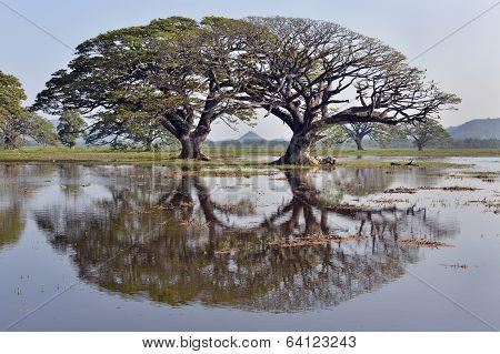 Trees reflected in lake, Sri Lanka