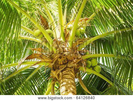 Delightful Coconut