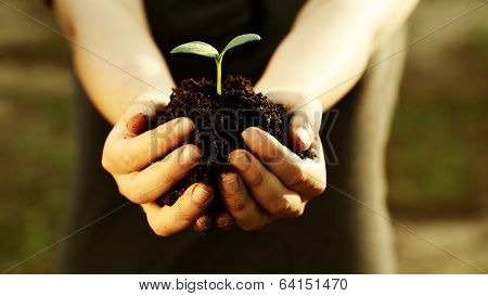 Female Hand Holding A Young Plant