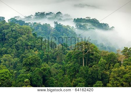 Morning fog in a wild tropical rainforest in Kaeng Krachan national park, Thailand