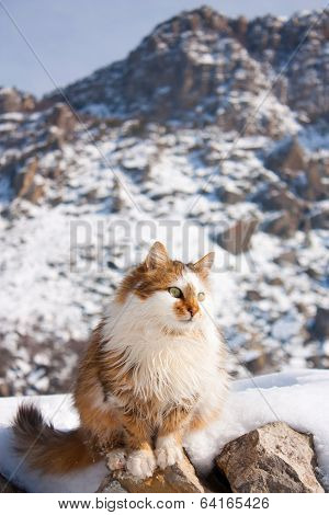 poster of the fluffy cat outside in winter mountains