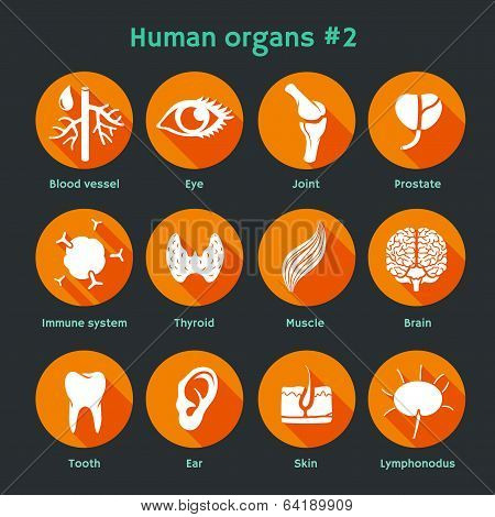 Vector flat icons with human organs and systems