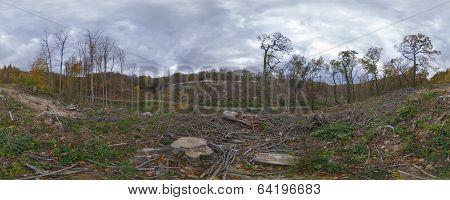 Sad autumn forest panorama