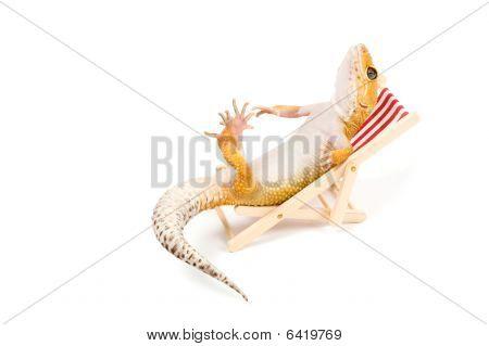 Gecko Relaxing In Beach-chair