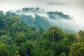 Morning fog in a wild tropical rainforest in Kaeng Krachan national park, Thailand poster