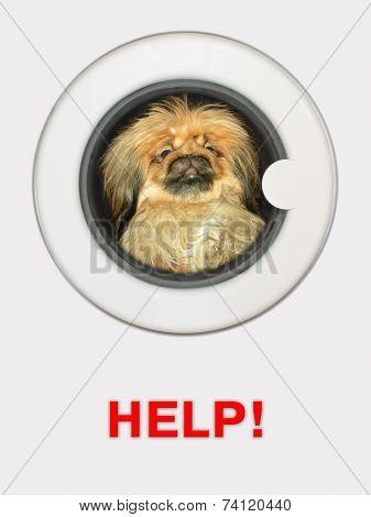 Afraid dog (pekinese) in washing machine - Help!