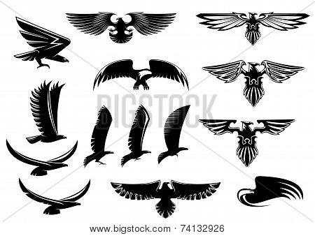 Eagle, falcon and hawk birds set