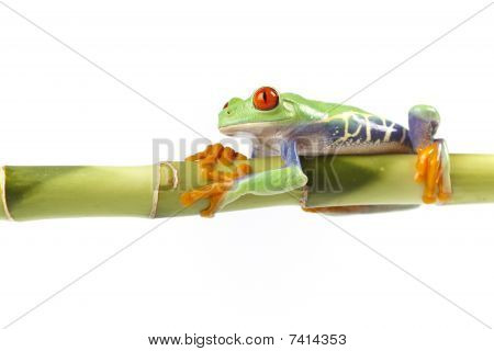Frog sitting on bamboo