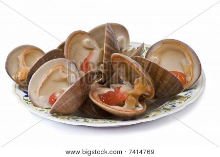 poster of Smooth clams alive isolated on a white background.