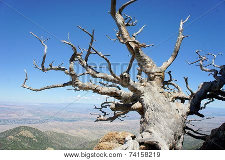 Tree growing on a rocky mountain