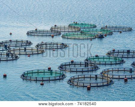 Fish farming Greece