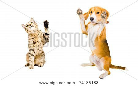 Cat and dog standing together