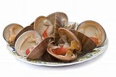 Smooth clams alive isolated on a white background. poster