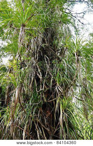 The Daintree Rainforest