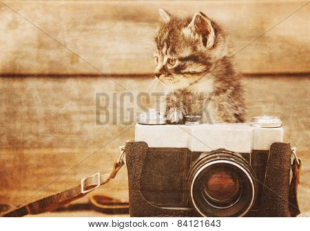 Kitten with photo camera, vintage image