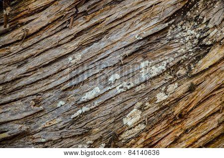 Trunk Texture Gnarled Juniper Tree