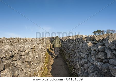 Rambler Walking In English Countryside