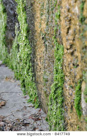 Green California Cliff walls
