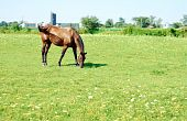 horse in wildflower meadow with a blue sky poster