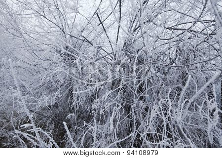 Forest in winter with branches full of frost