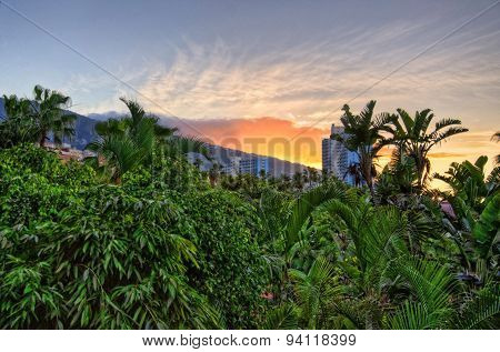 Sunset Above Jungles, Tenerife, Canarian Islands